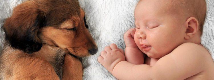 Especial Bem viver: Saiba como preparar seu cãozinho para a chegada de um bebê